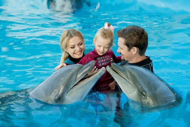 Schwimmen und tauchen mit delphinen im RESORT & SPA HOTEL NEMO, foto № 23