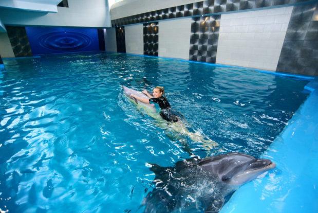 Schwimmen und tauchen mit delphinen im RESORT & SPA HOTEL NEMO, foto № 13