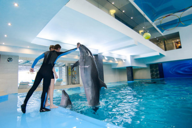 Swimming and diving with dolphins- Hotel NEMO, Photo № 14