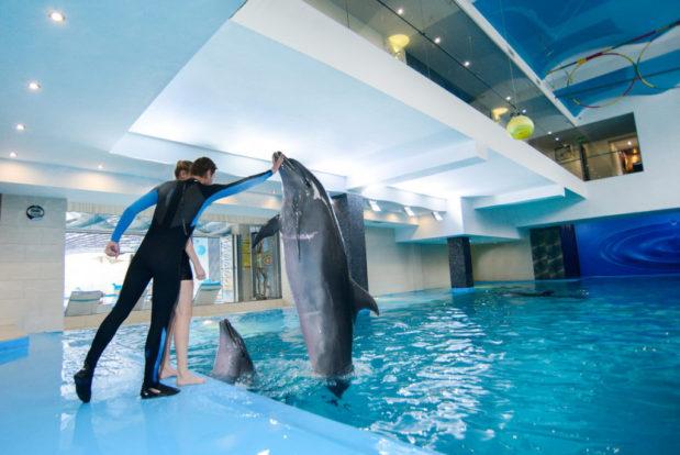 Schwimmen und tauchen mit delphinen im RESORT & SPA HOTEL NEMO, foto № 15