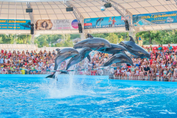 Dolphin show in RESORT & SPA HOTEL NEMO, photo № 7