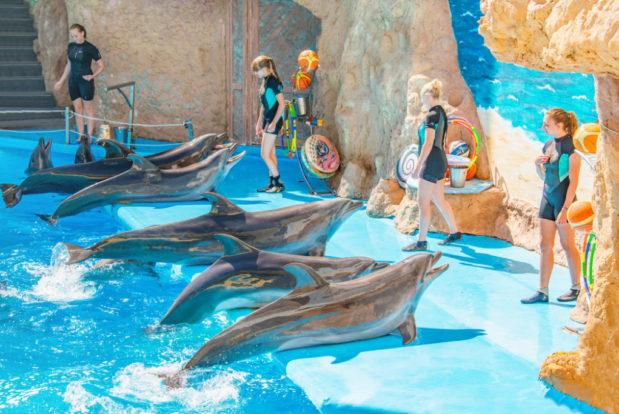 Dolphin show- Hotel NEMO, Photo № 4