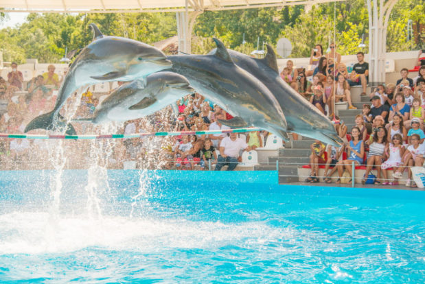 Dolphin show in RESORT & SPA HOTEL NEMO, photo № 2