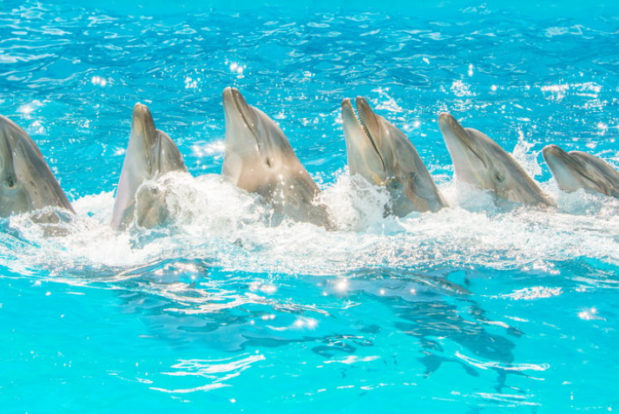 Dolphin show in RESORT & SPA HOTEL NEMO, photo № 4