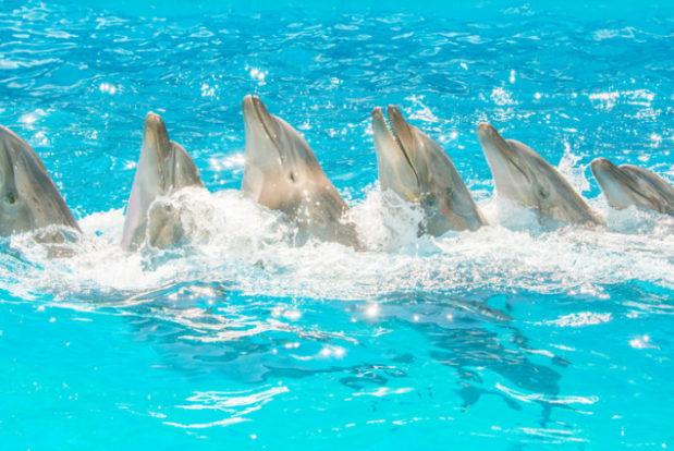 Dolphin show- Hotel NEMO, Photo № 7
