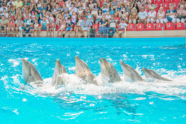 Dolphin show in RESORT & SPA HOTEL NEMO, photo № 3