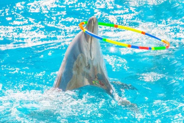 Dolphin show- Hotel NEMO, Photo № 8
