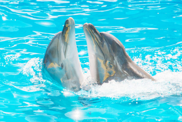 Dolphin show in RESORT & SPA HOTEL NEMO, photo № 6