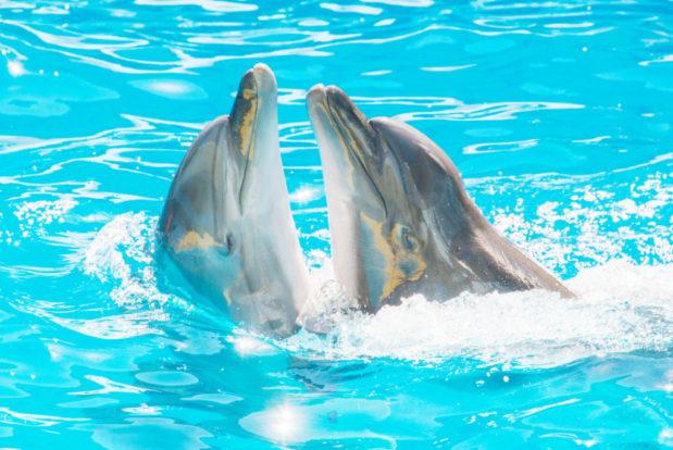 Dolphin show- Hotel NEMO, Photo № 6