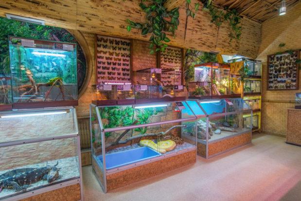 Besuch der show-vorstellung und des ozeanariums- Hotel NEMO, Foto № 3