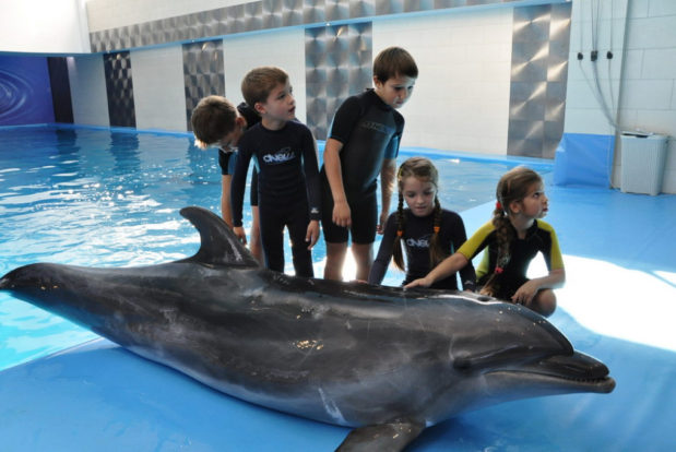 Young dolphin trainer- Hotel NEMO, Photo № 4